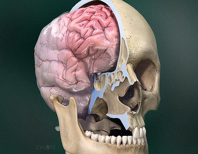 полость черепа
