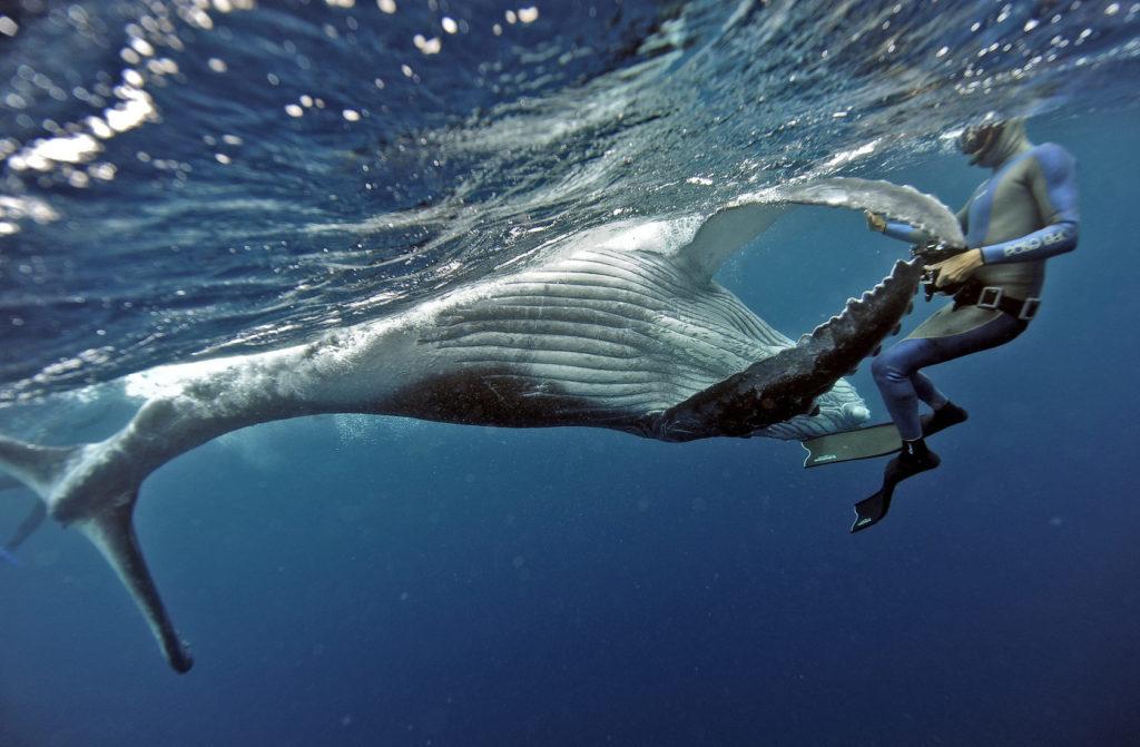 Фридайвер и кит